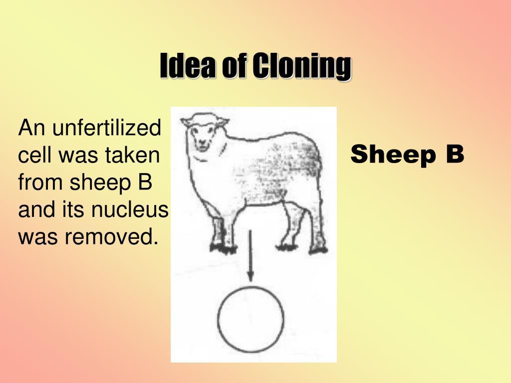 Idea of Cloning