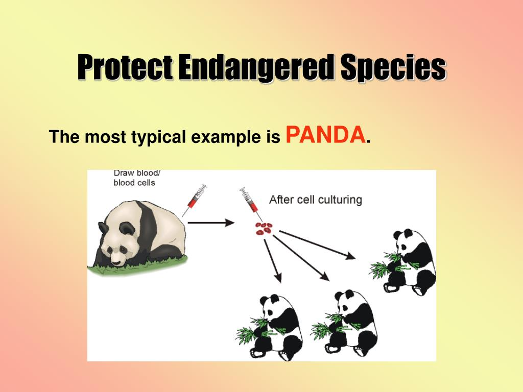 Protect Endangered Species