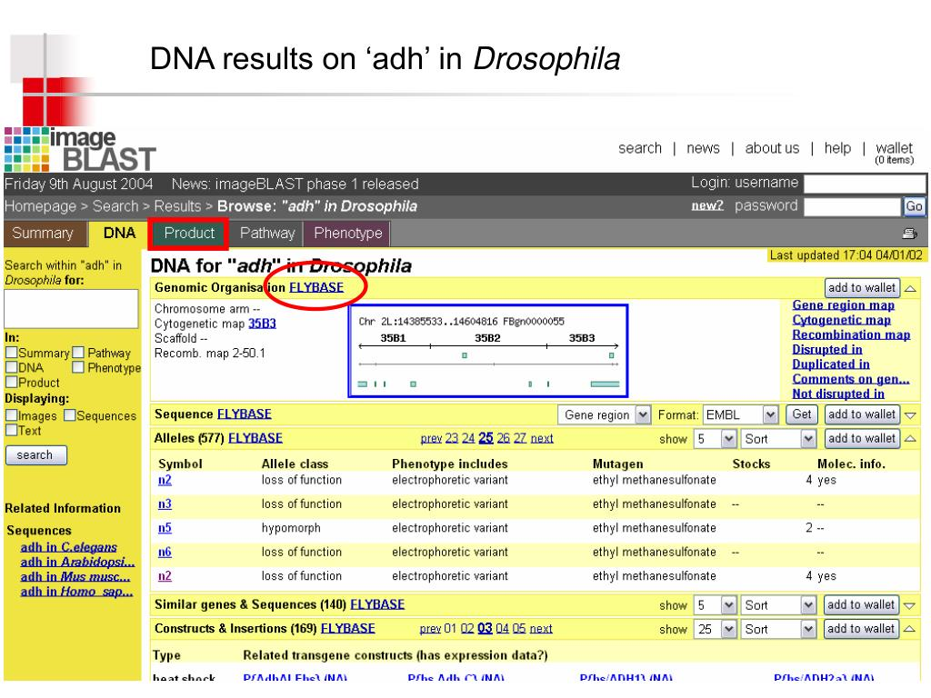 DNA results on 'adh' in