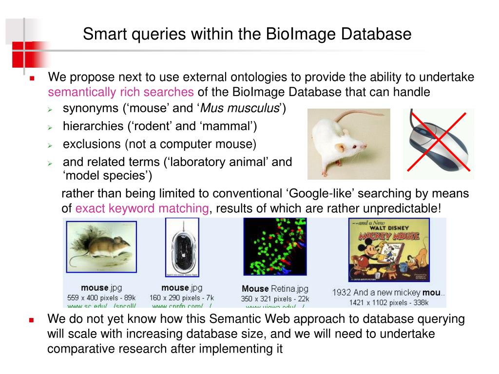 Smart queries within the BioImage Database