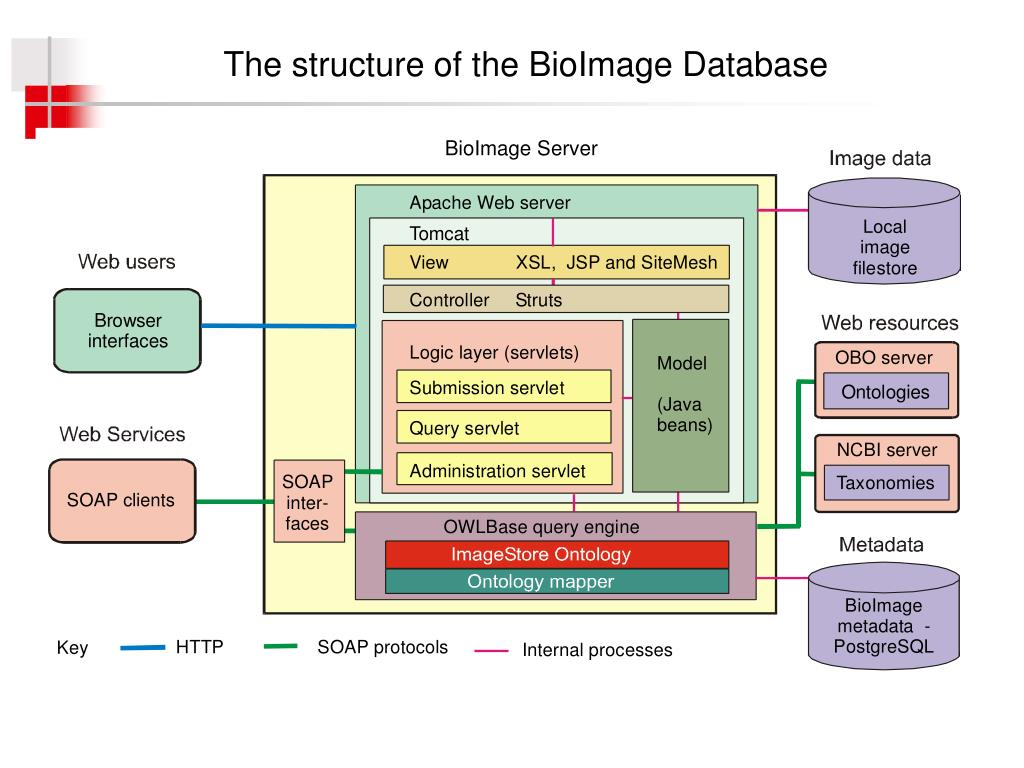 The structure of the BioImage Database