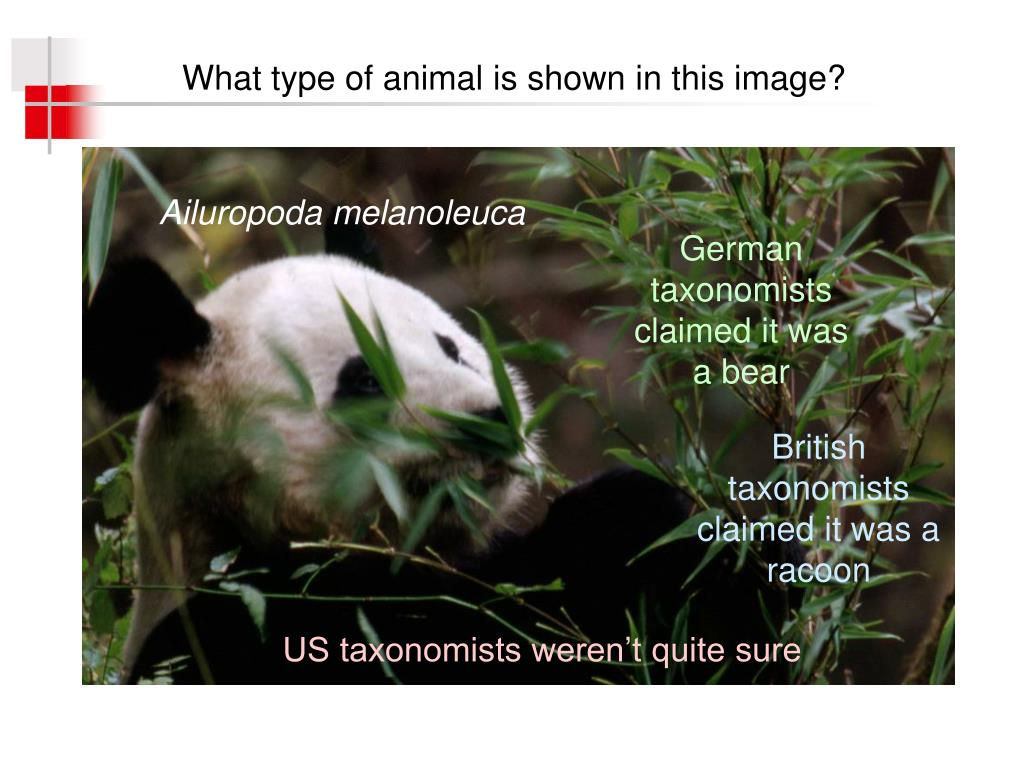 What type of animal is shown in this image?