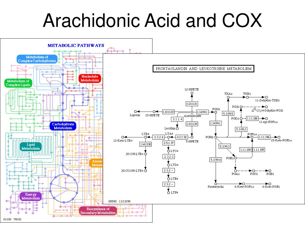 Arachidonic Acid and COX