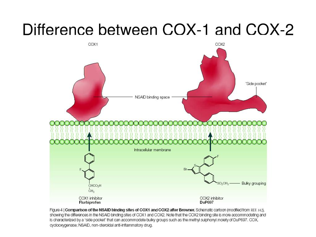 Difference between COX-1 and COX-2