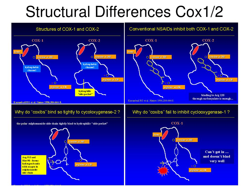 Structural Differences Cox1/2