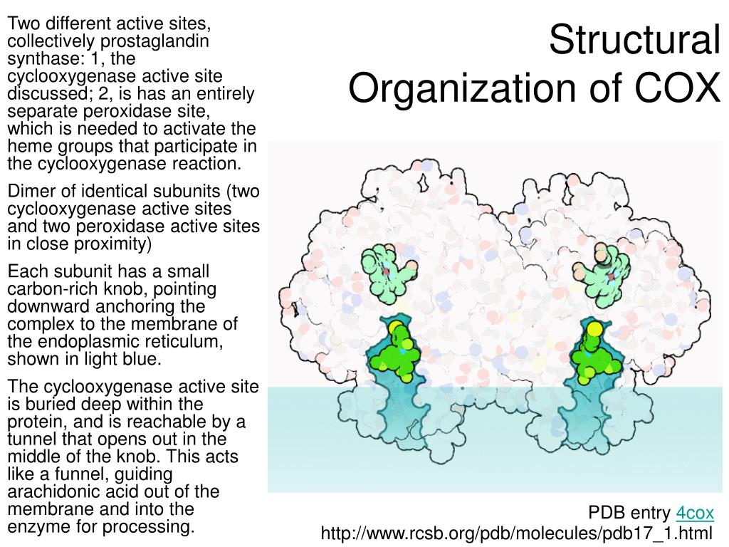 Structural Organization of COX