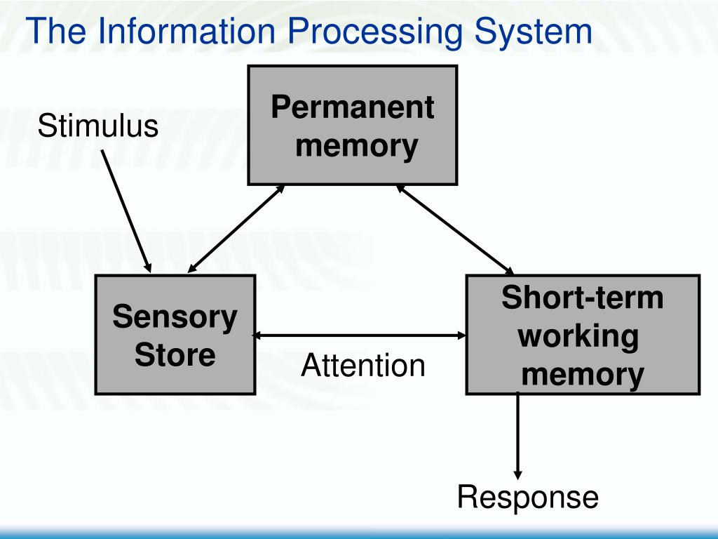 The Information Processing System