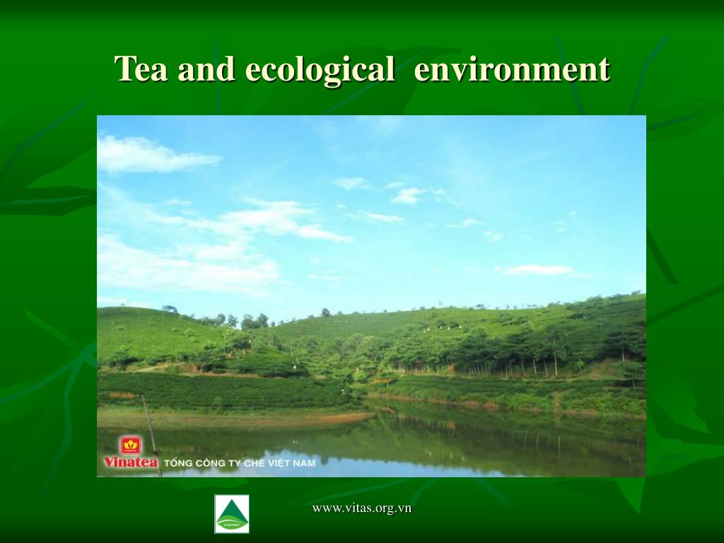 Tea and ecological  environment