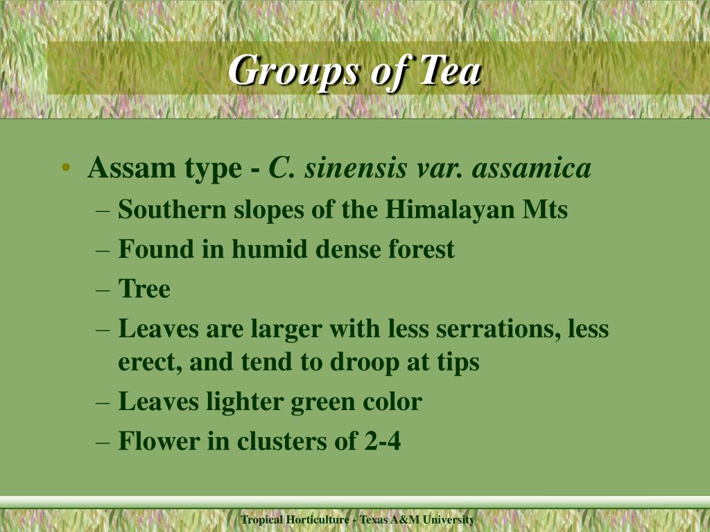 Groups of Tea