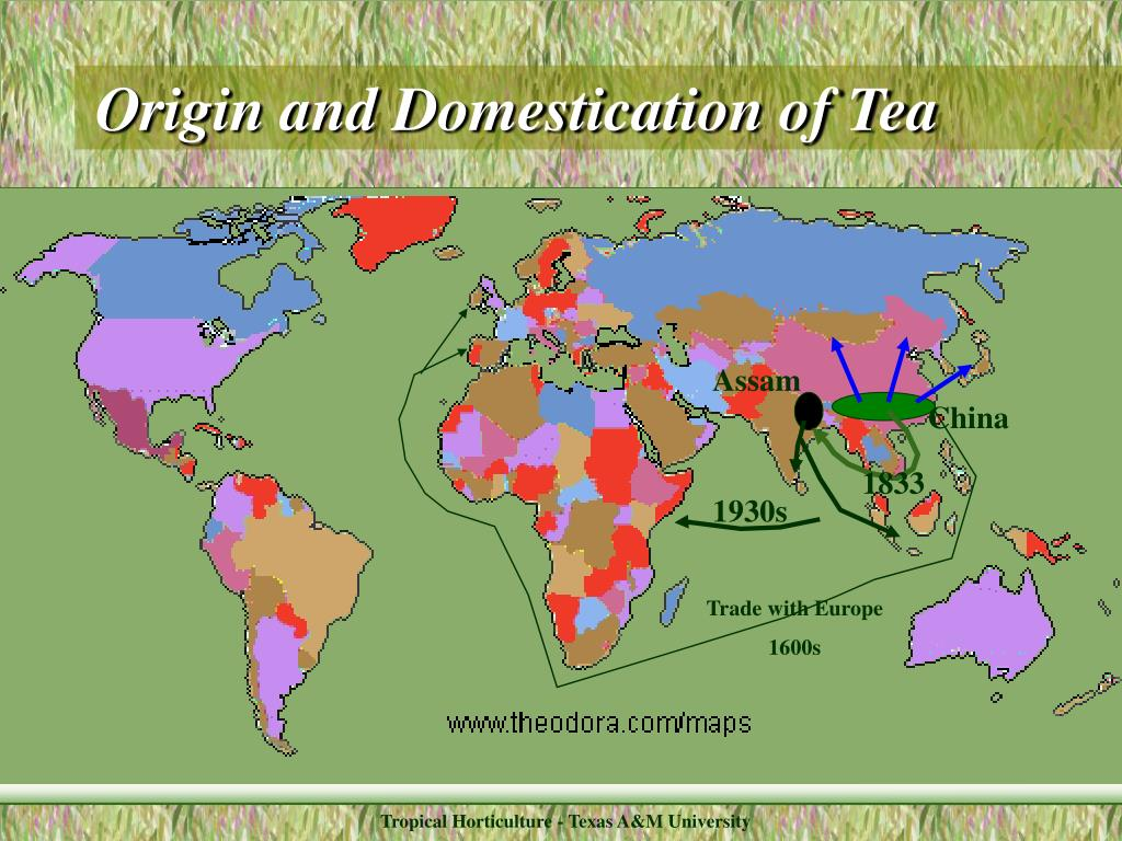 Origin and Domestication of Tea