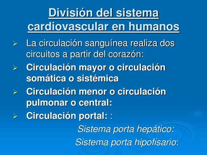 División del sistema cardiovascular en humanos