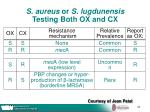 s aureus or s lugdunensis testing both ox and cx