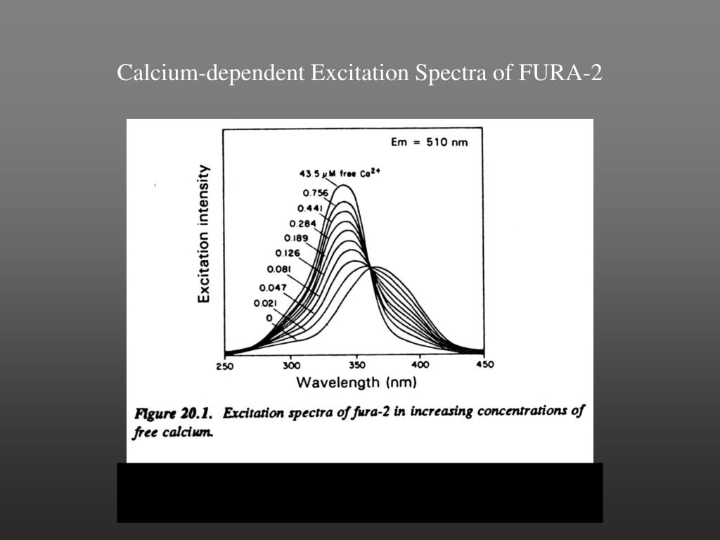 Calcium-dependent Excitation Spectra of FURA-2