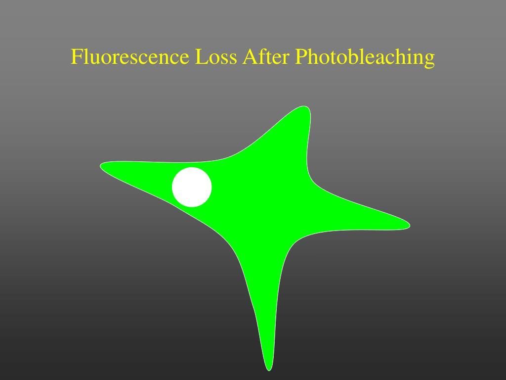 Fluorescence Loss After Photobleaching