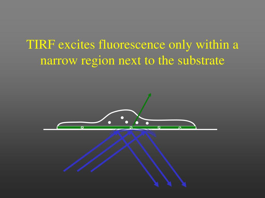 TIRF excites fluorescence only within a narrow region next to the substrate