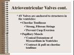atrioventricular valves cont