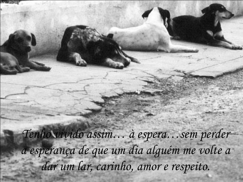 Tenho vivido assim… à espera…sem perder a esperança de que um dia alguém me volte a dar um lar, carinho, amor e respeito.