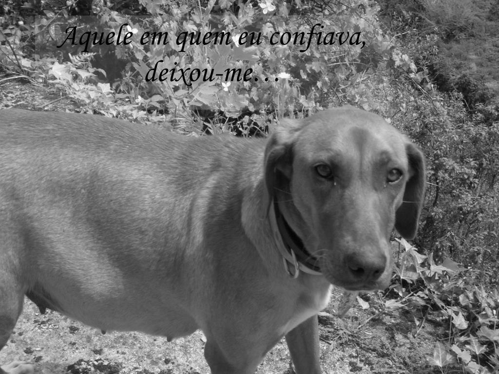 Aquele em quem eu confiava, deixou-me…
