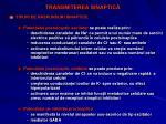 transmiterea sinaptic2