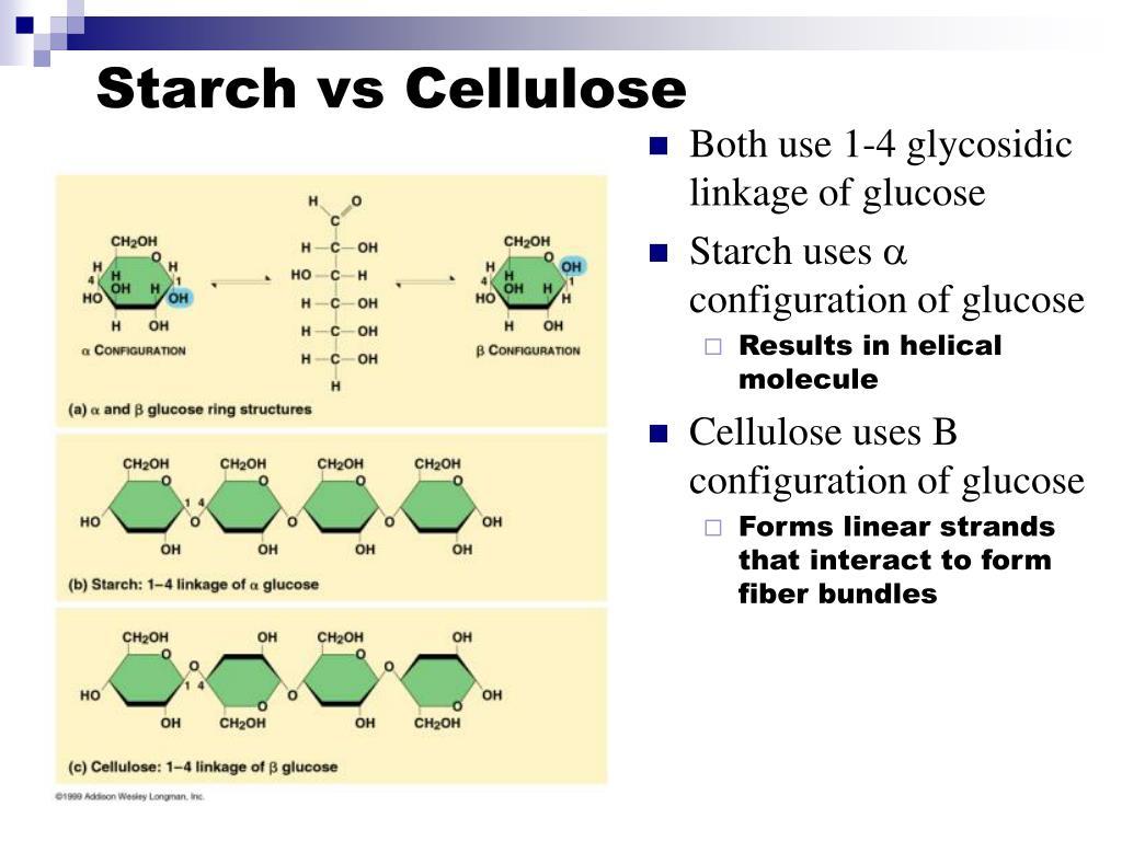 Starch vs Cellulose