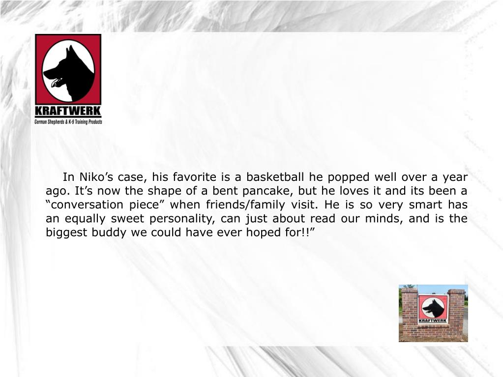 """In Niko's case, his favorite is a basketball he popped well over a year ago. It's now the shape of a bent pancake, but he loves it and its been a """"conversation piece"""" when friends/family visit. He is so very smart has an equally sweet personality, can just about read our minds, and is the biggest buddy we could have ever hoped for!!"""""""