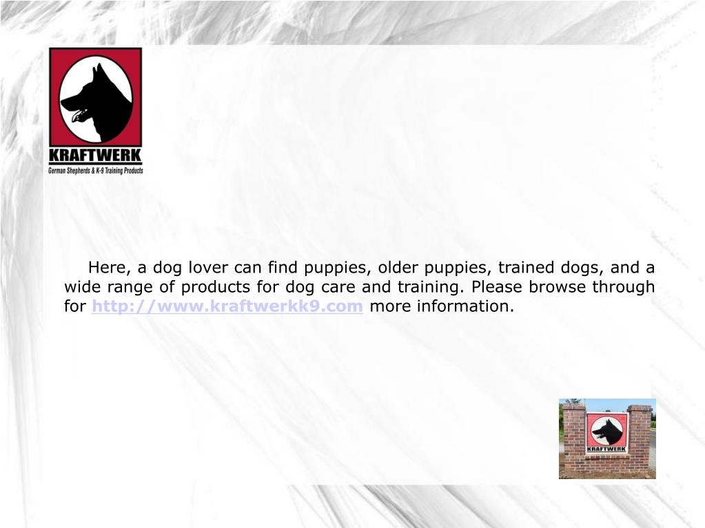 Here, a dog lover can find puppies, older puppies, trained dogs, and a wide range of products for dog care and training. Please browse through for