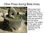 olive press during bible times