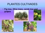 plantes cultivades9