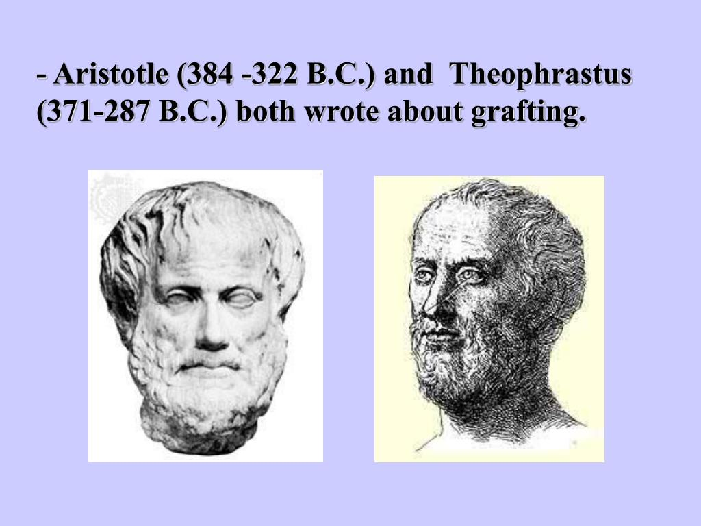 - Aristotle (384 -322 B.C.) and  Theophrastus (371-287 B.C.) both wrote about grafting.