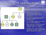 physiology of color blindness