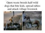 open waste breeds half wild dogs that bite kids spread rabies and attack village livestock