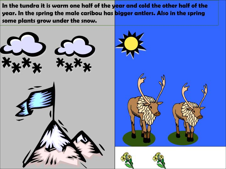 In the tundra it is warm one half of the year and cold the other half of the year. In the spring the...