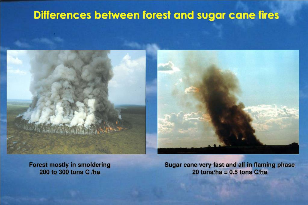 Differences between forest and sugar cane fires