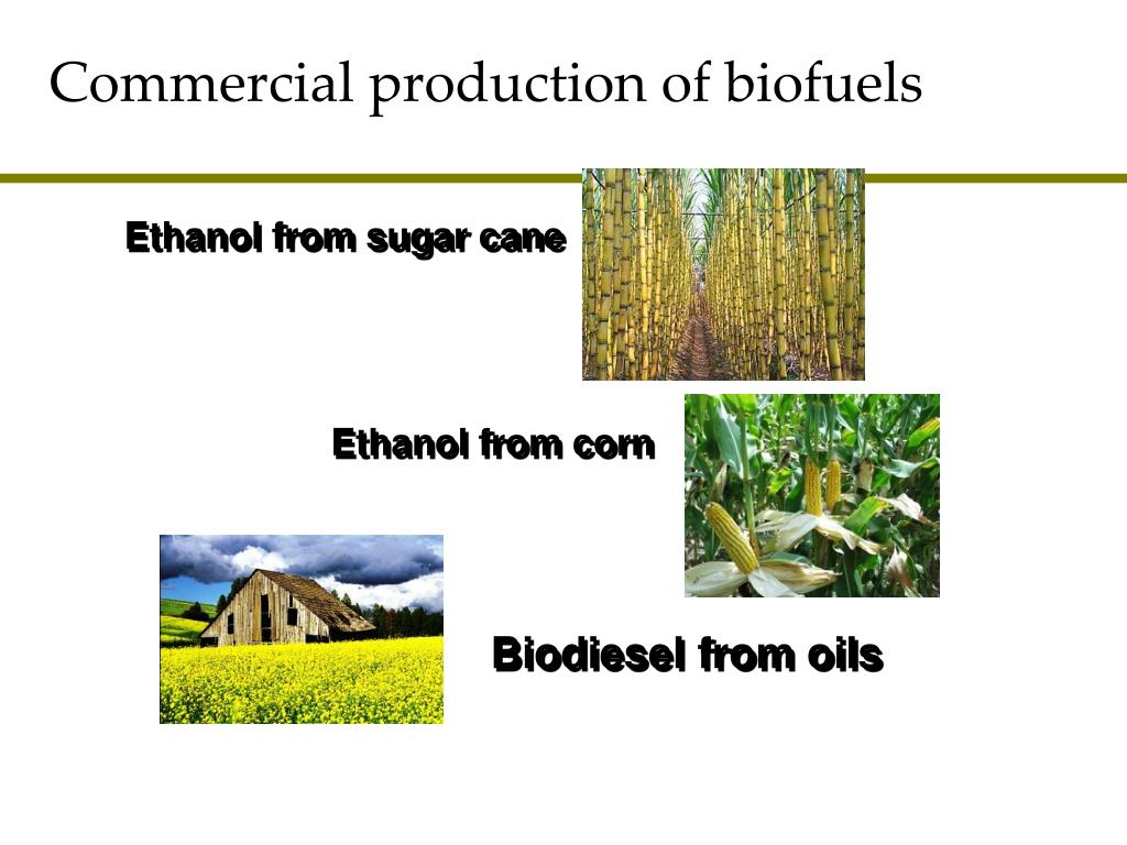 commercial production of biofuels l.