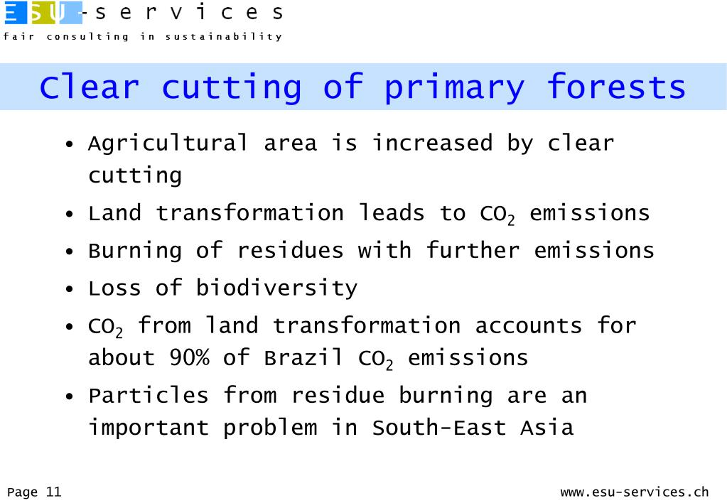 Clear cutting of primary forests