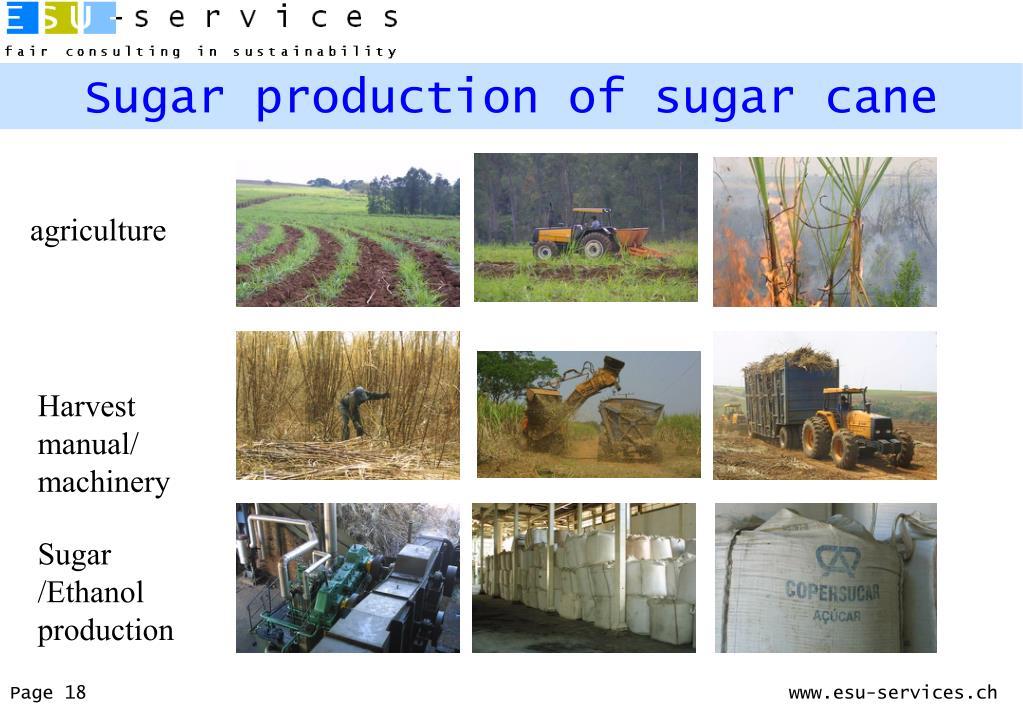Sugar production of sugar cane