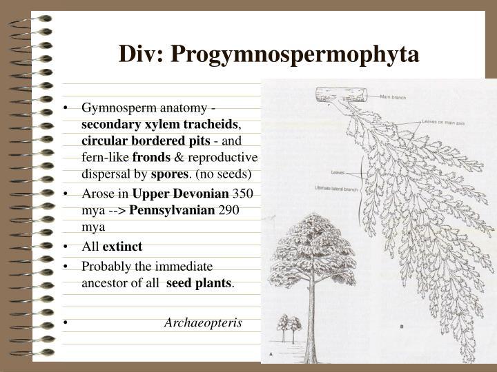 Div progymnospermophyta