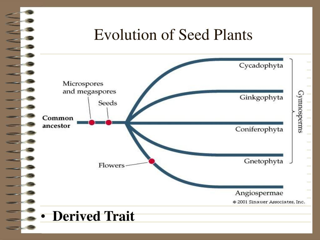 Evolution of Seed Plants