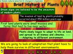 brief history of plants