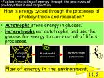 how is energy cycled through the processes of photosynthesis and respiration