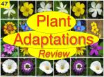 plant adaptations review