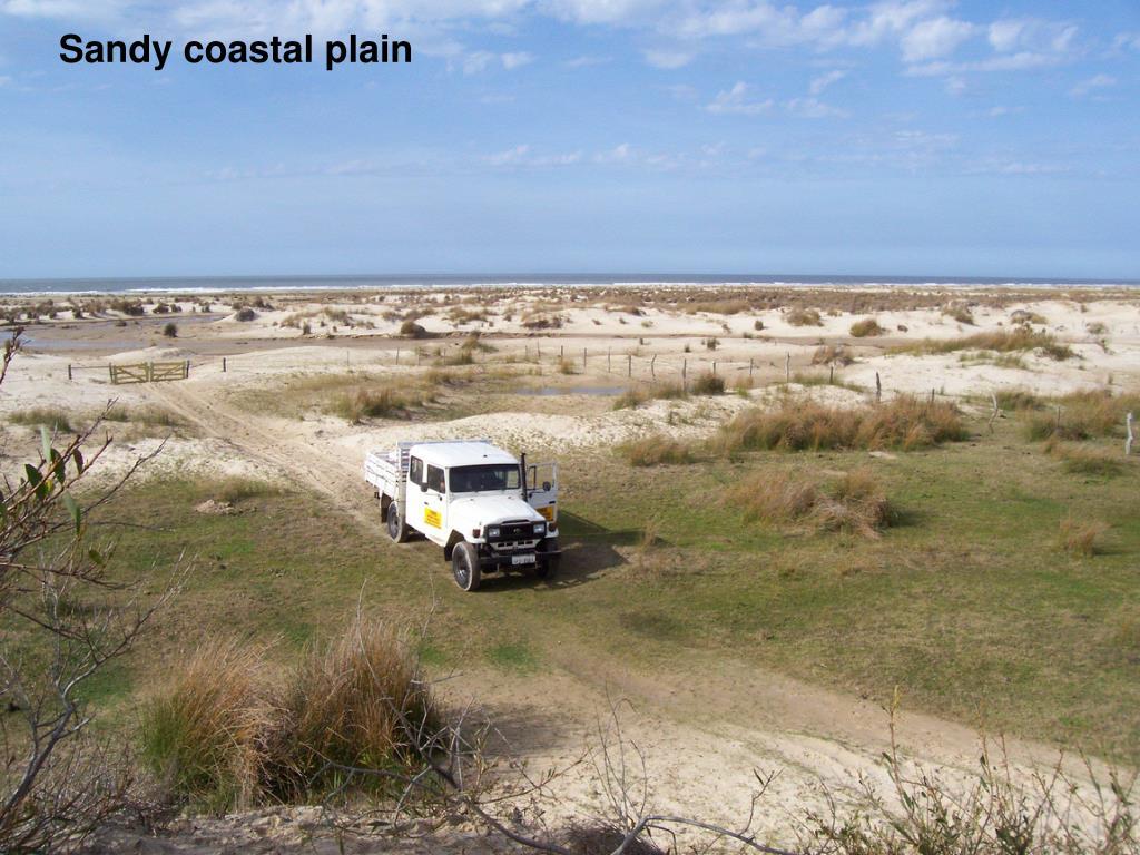 Sandy coastal plain
