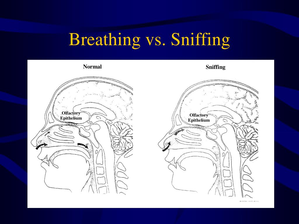 Breathing vs. Sniffing