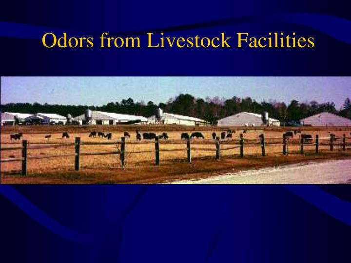 Odors from Livestock Facilities