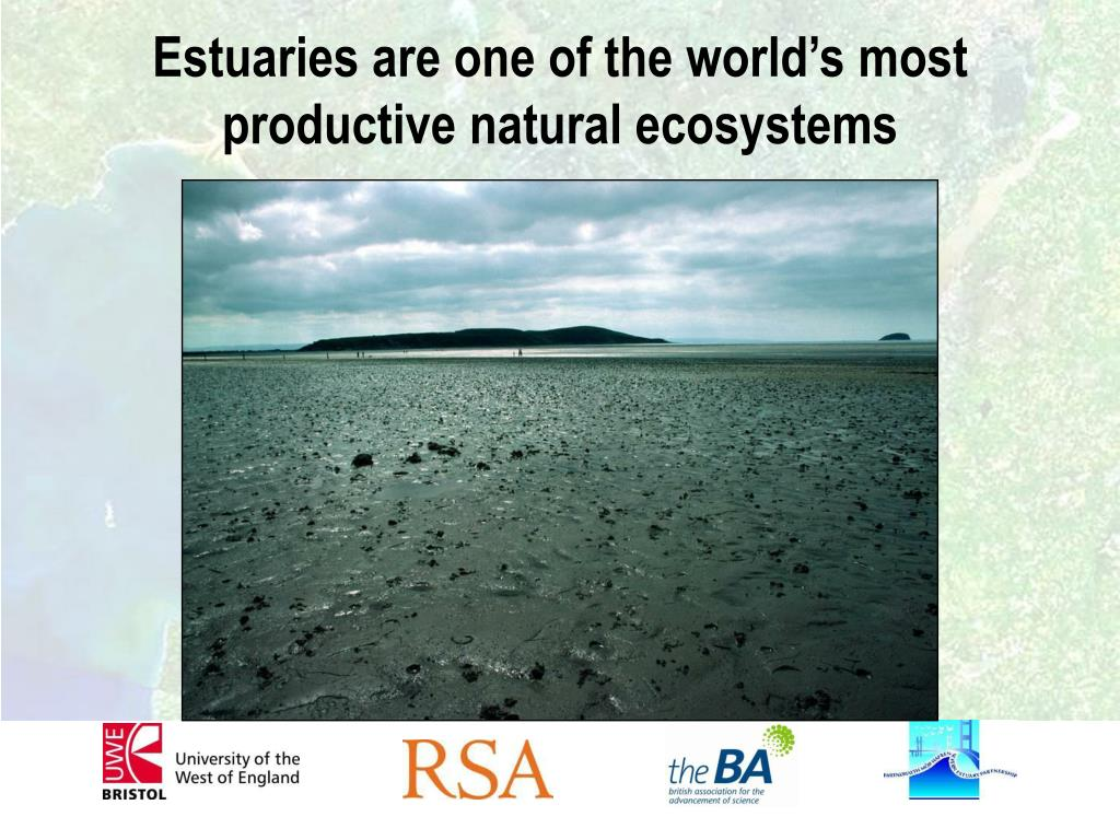 Estuaries are one of the world's most productive natural ecosystems