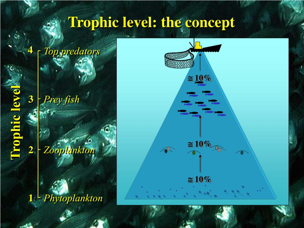Trophic level: the concept