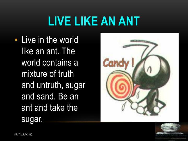 Live like an ant