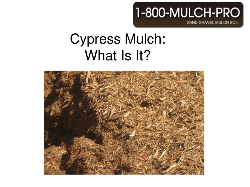 cypress mulch what is it l.