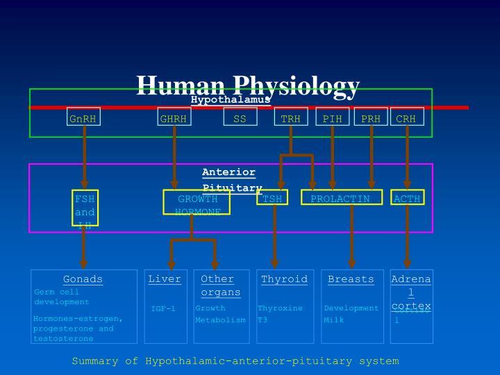 Human Physiology