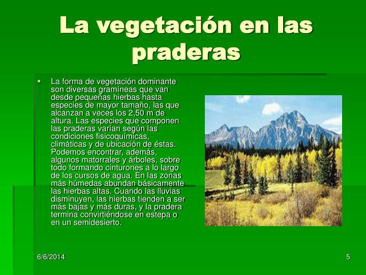 La vegetación en las praderas